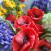 Цветочное настроение (10)